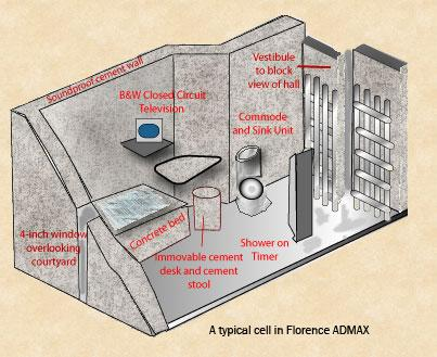 florence typical cell
